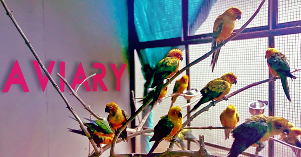 Aviary - Family theme park